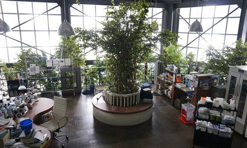 インハンド植物園の紐倉研究所がおしゃれすぎ!家具はどこの物?