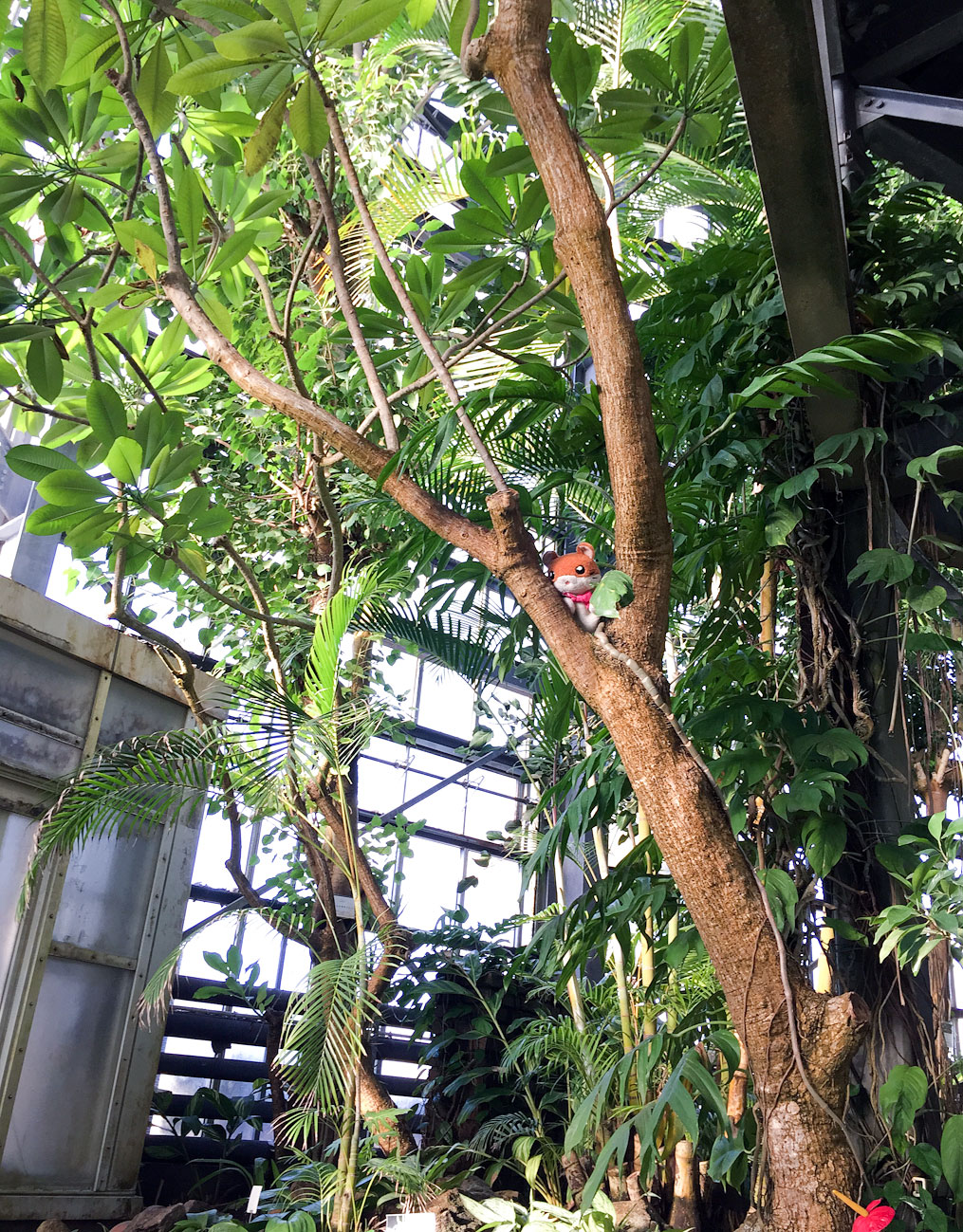 アロハガーデンたてやまの植物園がインハンドの紐倉研究所の撮影ロケ地