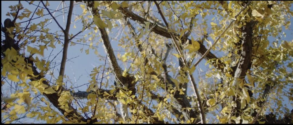 ラストシーンで美しい胃腸の葉が揺れているシーンが美しかった