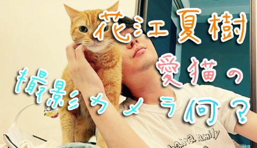 【猫愛やばすぎ】花江夏樹の撮る写真がプロ級!カメラは何を使ってるの?