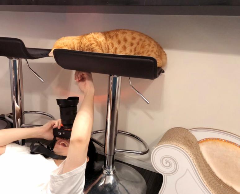 【猫愛やばすぎ】花江夏樹の撮る写真がプロ級!何のカメラを使ってるの?