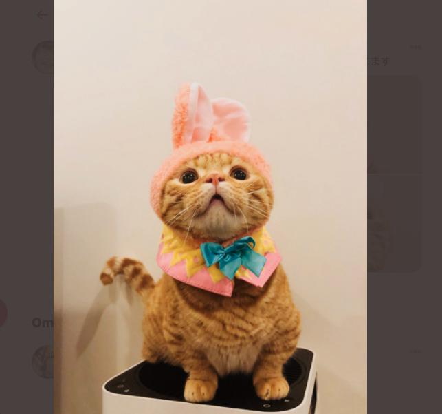 【似てる】花江夏樹の飼い猫が2匹ともかわいい!名前と見分け方をお伝えします
